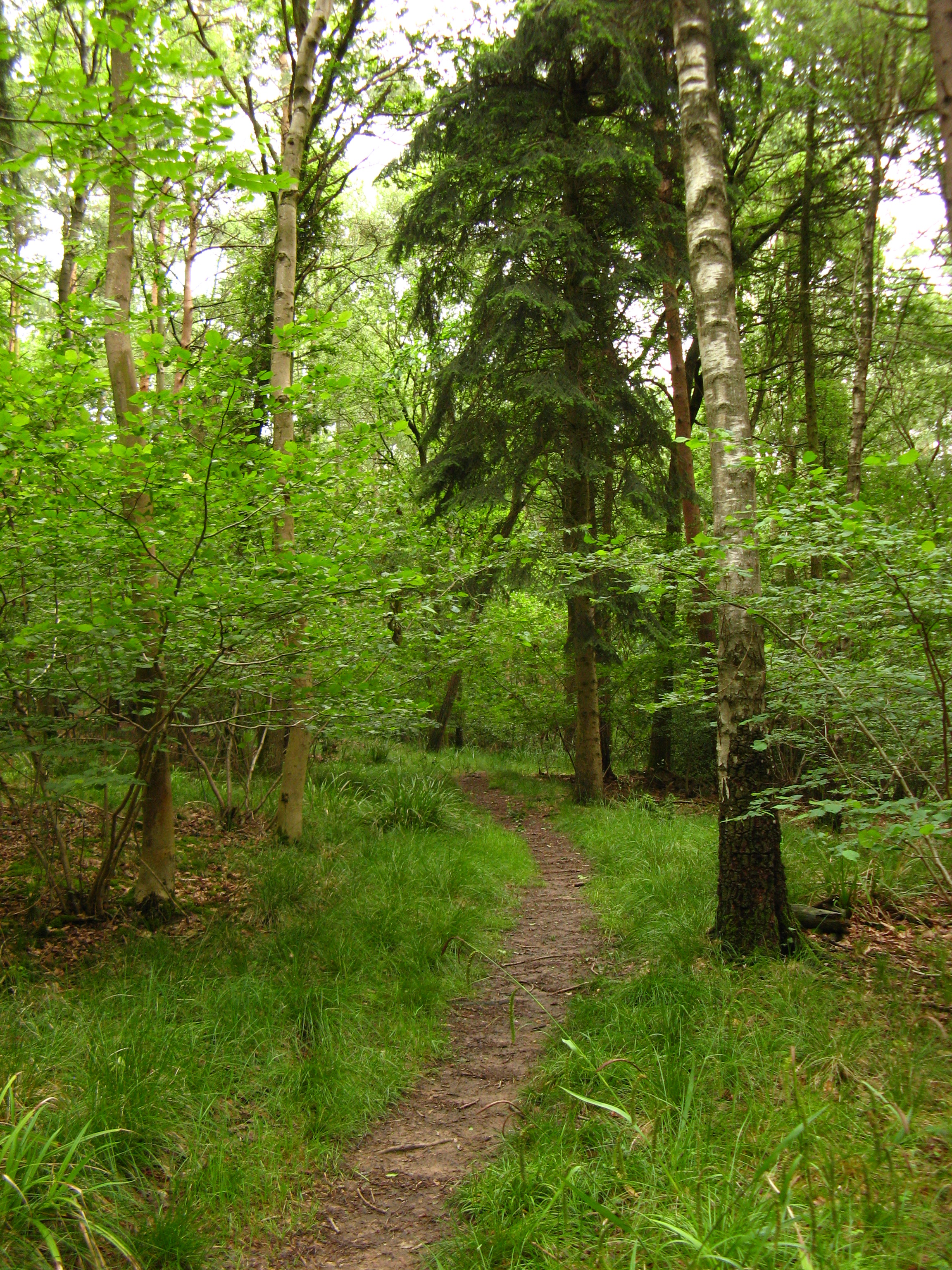The way through the woods 2.JPG