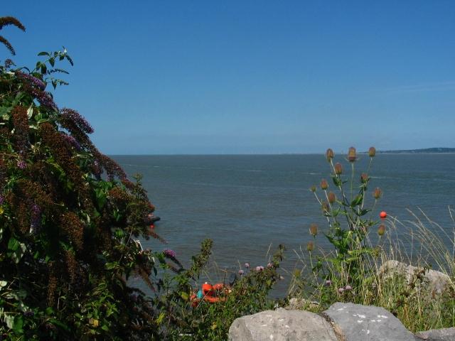widening estuary.JPG